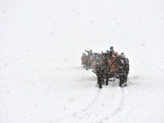 sleigh ride in snow