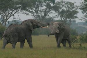 queen-elizabeth-elephants