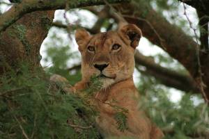 queen-elizabeth-national-park-uganda