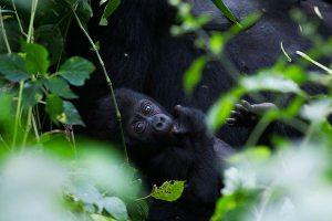 bwindi-impenetrable-national-park