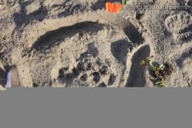 Dog Tracks