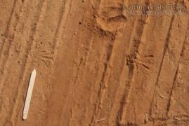 Grasshopper Tracks
