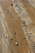 Owl Tracks