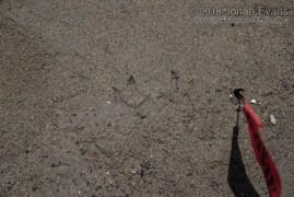 Tern Tracks