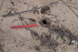 Wolf Spider Hole