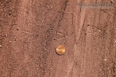 Montezuma Quail Tracks