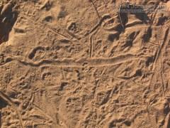 Sidewinder Tracks