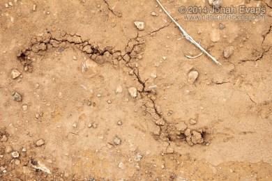 Mole Cricket Ridges