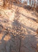 Kangaroo Rat Trail