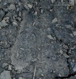 Pronghorn Tracks