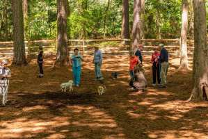Chatham County NC Dog Park Contractor