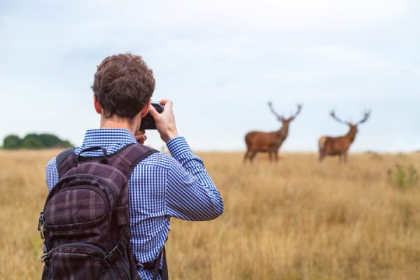What's the Best Camera for Wildlife Photography? | Nature TTL