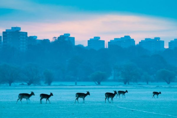 Urban Wildlife: How to Photograph Wildlife in the City ...