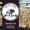 Fazenda cogumelos mágicos natureza sana