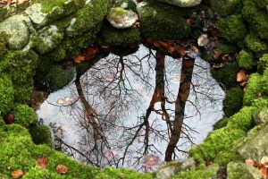 nature-254951_640
