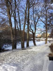 21 feb 2017 Ulla Widlunds foto