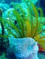 Algas Marinas: Fuente de Minerales y Vitaminas para la salud