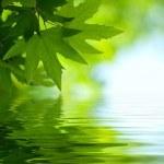 FENACO: Reconocimiento justo de la Profesión Naturopática