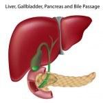Nuestra Inmunidad depende del Hígado