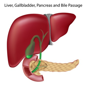 La Salud del Hígado. Como cuidarlo
