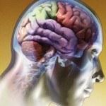 El Nervio Vago y su Influencia en la Salud del cuerpo