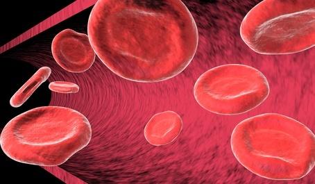 Circuito Circulatorio : ✓ aparato circulatorio enfermedades y su importancia para la salud