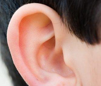 Oido interno