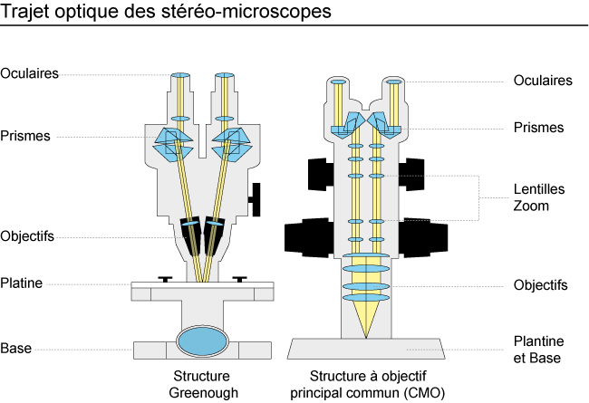 StereoMicroscope Diagram