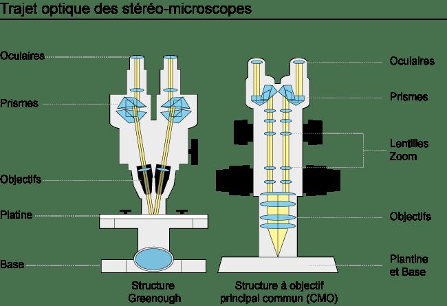 StereoMicroscope Diagram