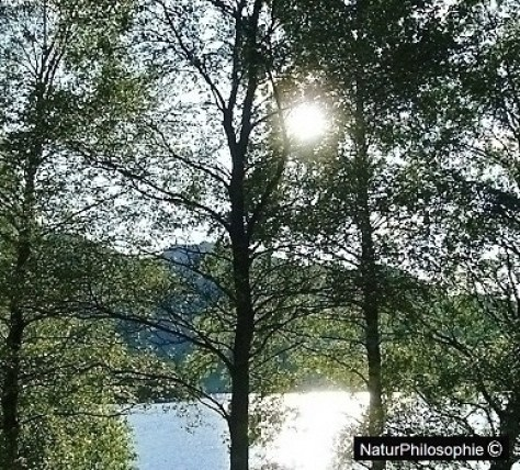 A photograph showing the sun reflecting over the waters at Loch Kathrine through a curtain of trees. Low sun. Image: NaturPhilosophie