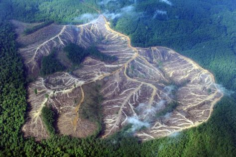 An aerial photograph showing the deforestation web in the Mountains of Jambi, in Sumatra, Indonesia.
