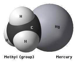 A chemical model representing a methyl mercury molecule.