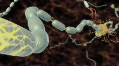 An artist's impression of a myelinated nerve axon sheath propagating action potentials along neuron fibres.