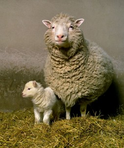 A photograph showing Dolly the sheep and Bonny.