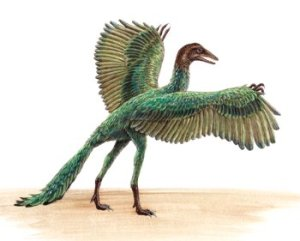 An artist's impression of the Archaeopteryx - a genus of bird-like dinosaurs that is transitional between non-avian feathered dinosaurs and modern birds.