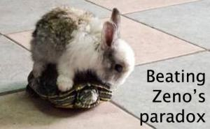 A humoristic meme showing perhaps the only way for the rabbit of beating Zeno's paradox. The photograph shows a bunny rabbit riding on the back of a small pet turtle.