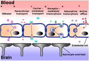 A diagram explaining the different types of ionic transports through the blood-brain barrier.