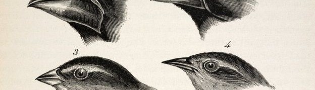 On the Evolution of Darwin's Finches