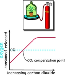 A graph illustration showing the compensation point of carbon dioxide in plant growth.