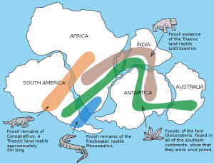 A diagrammatic map designed and re-designed by Snider, Pellegrini and Wegener of the similar fossil patterns that can be found across several (nowadays distant) continents.