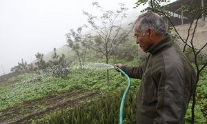 A photograph showing a small scale urban farmer watering his crops in the outskirts of Lima.