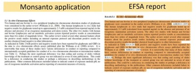 A copy showing an extract of the EFSA report that appears to be an almost exact copy of an extract from the Monsanto application.