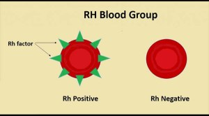 A simple diagram showing the difference between cells that are Rh + (where the antigen is present) and Rh - (where the antigen is absent) blood groups. Image source: MicrobeNotes