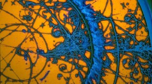 An artful rendition in yellow and blue of the particle tracks seen in a bubble chamber.