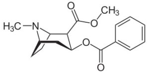 A chemical representation of the Hydrogen bonds in a Cocaine molecule.