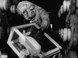 A black and white photograph showing sarin testing being carried out on a caged rabbit.