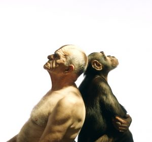 "An artistic photograph of a man an a chimp, sitting back to back. From ""Anima"" collection, published 1984."