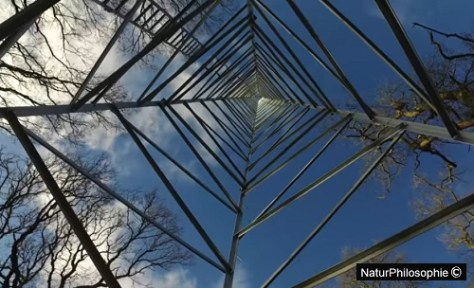 A photograph showing the view from underneath one of the BIFoR FACE in-situ experiment towers. Artwork: NaturPhilosophie
