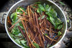 A photograph showing the inside of a cooking pot containing green leaves and pods.