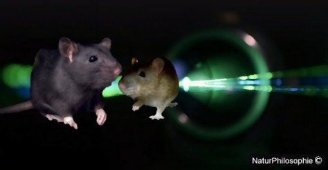 A digital image focusing on a black rat and a brown rat inside in a small lit up tunnel. Artwork: NaturPhilosophie